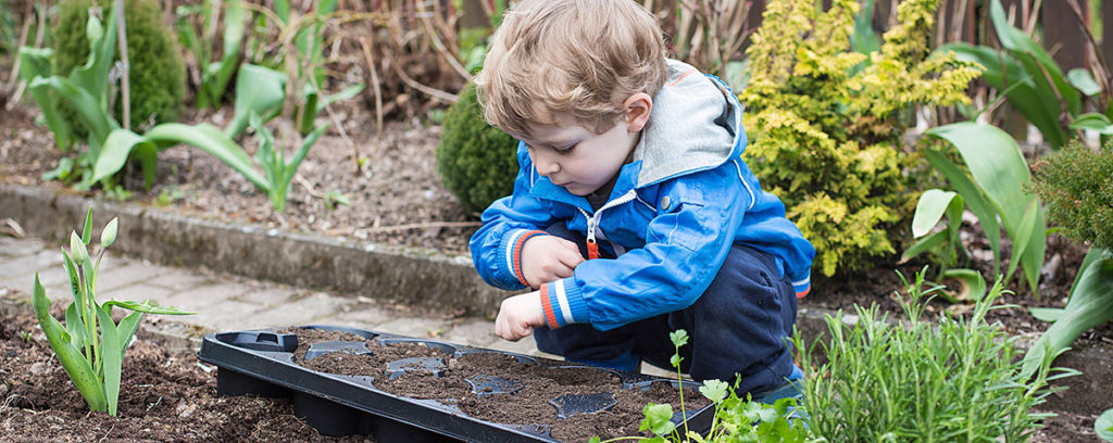 boy planting seeds in a flat of soil