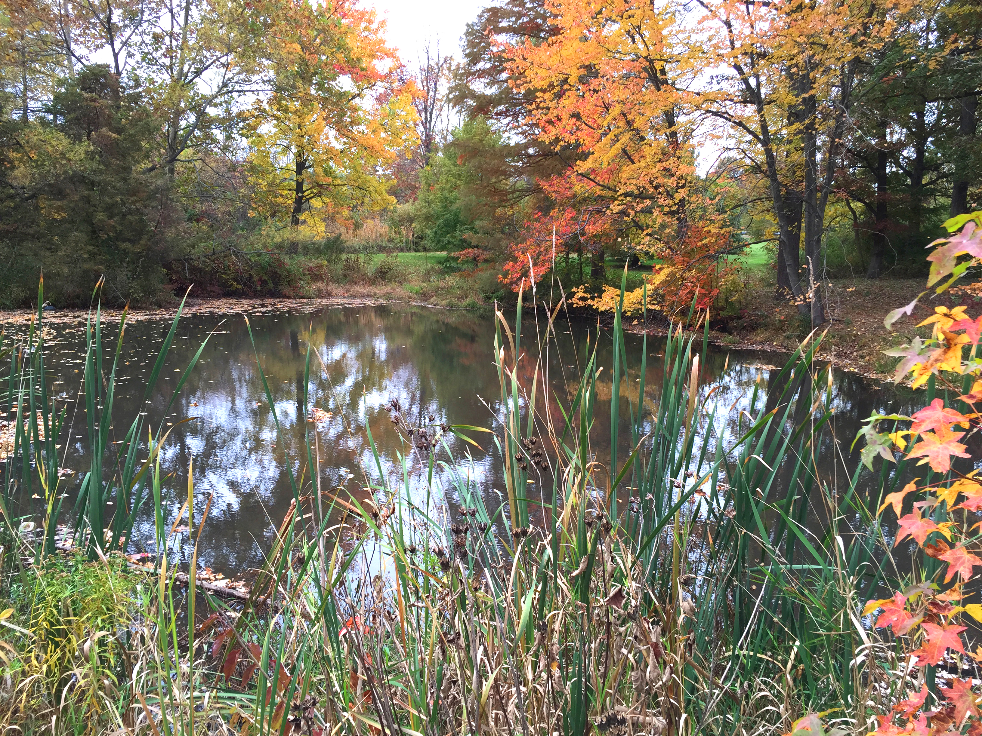 Pond during Fall