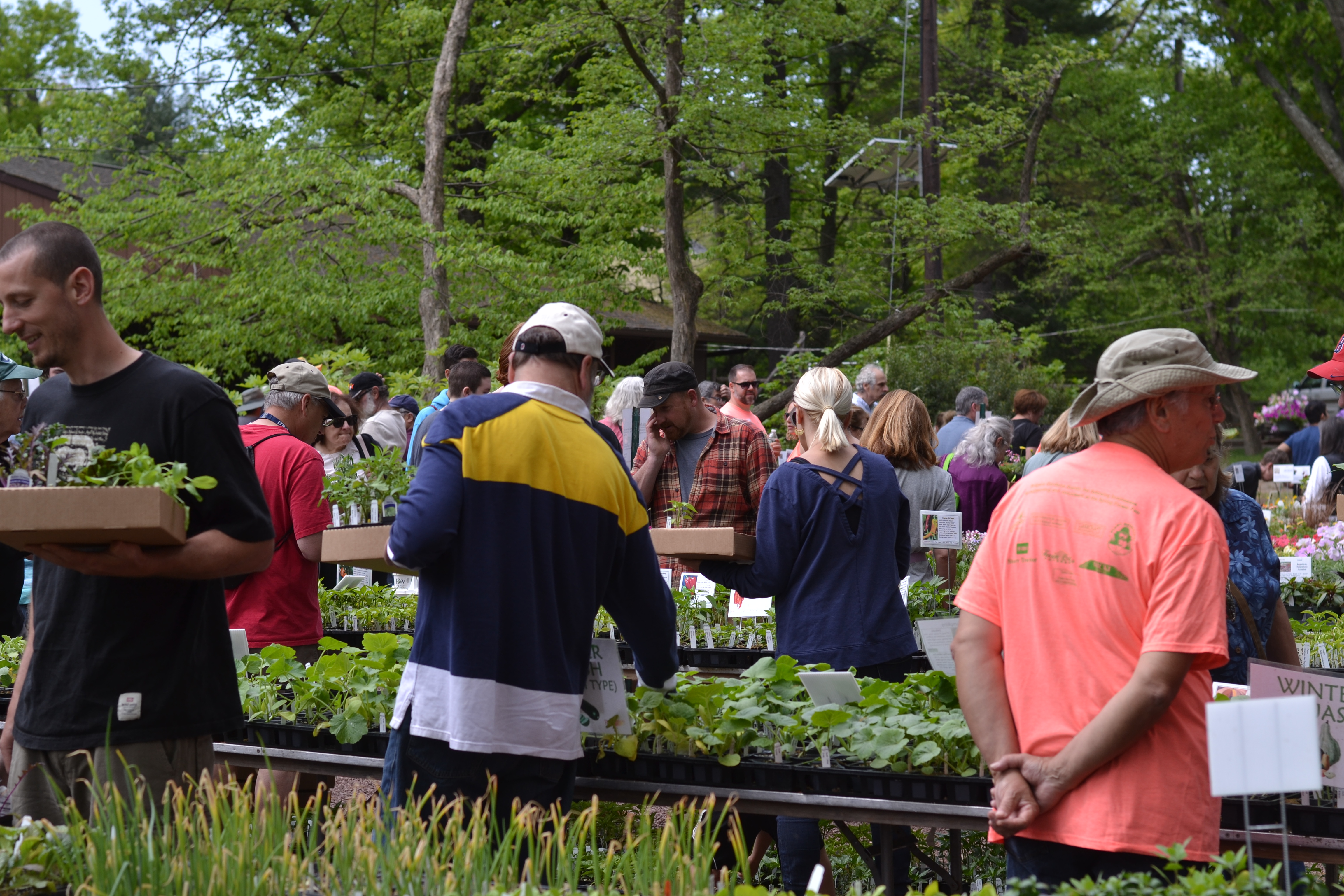 group of people shopping at plant sale