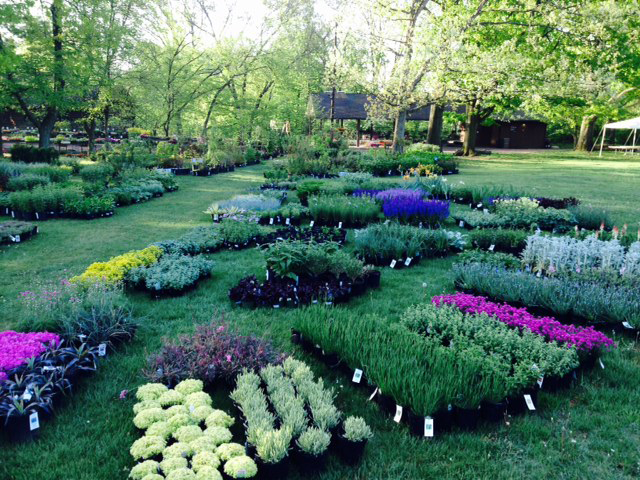 blocks of plants laid out for sale