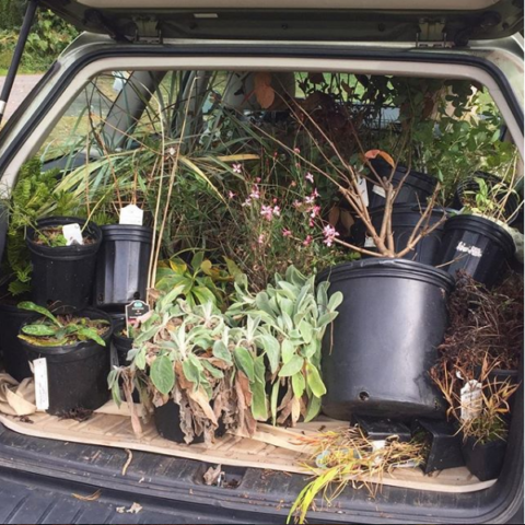 jumble of plants piled in car trunk