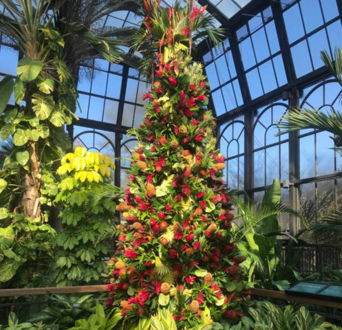 stylized tower of tropical foliage and flowers in the shape of a Christmas tree in the conservatory at Longwood Gardens