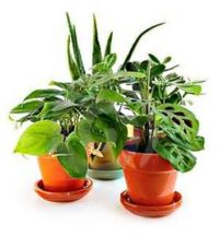 Group of houseplants in clay pots