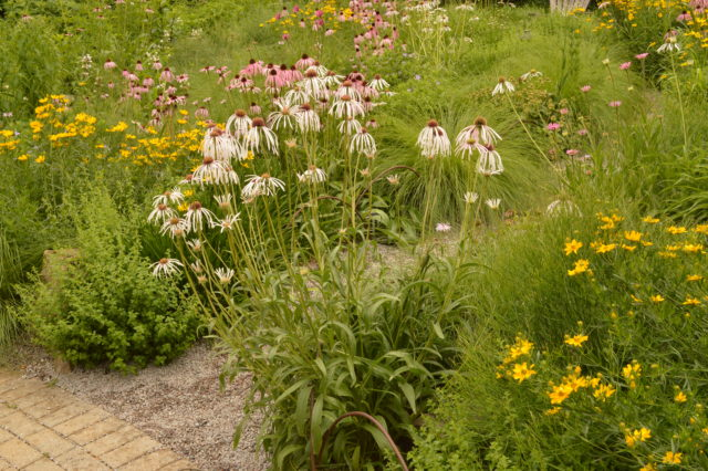 garden of pink, white, and yellow wildflowers