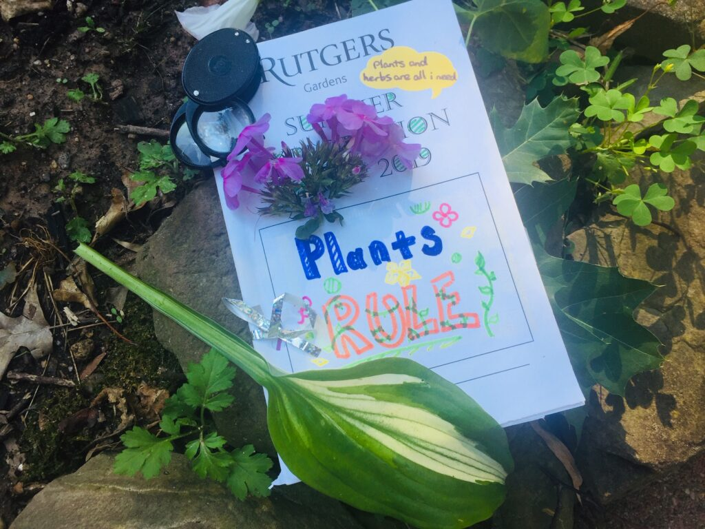 Homemade journal, magnifier and plant material.